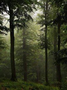 Wald-225x300