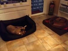 Jabali überlässt Emil sein großes Bett