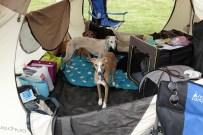 Unser Camping-Lager in Untersiebenbrunn :)