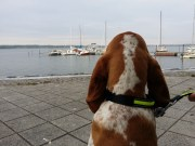 Rivana beobachtet Möwen am Bodden