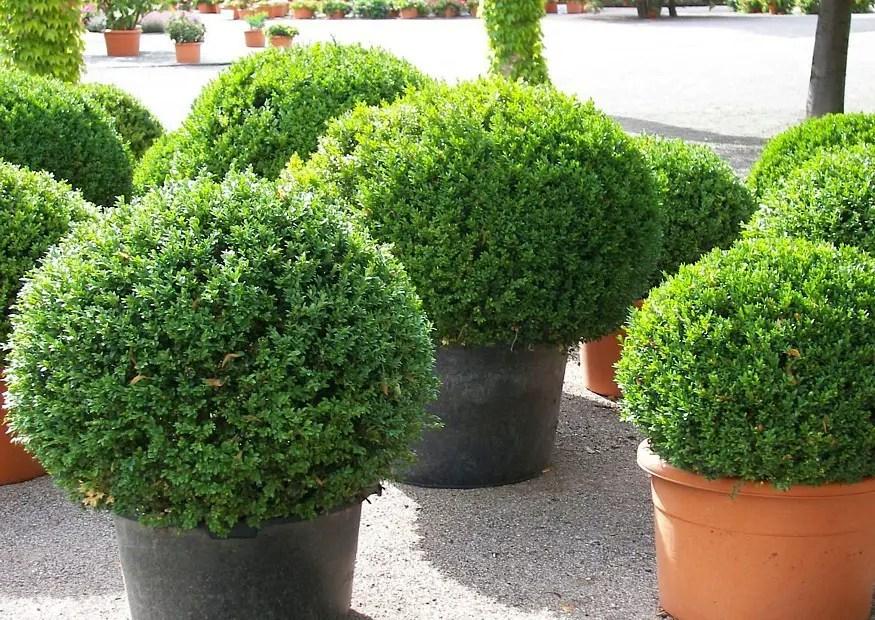Gartenpflanzen Winterhart Immergrün   Ideas Kletterpflanzen ...