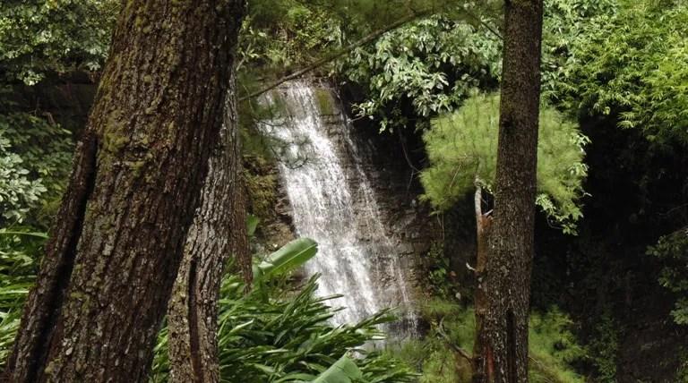 Curug Wana Suta Desa Dermaji dilihat dari sela-sela hutan pinus