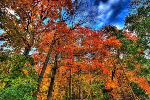 Por-que-se-cae-el-cabello-en-otoño-y-cómo-evitarlo