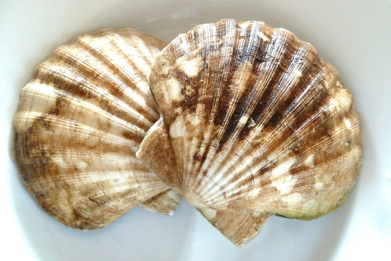 Jakobsmuschel Sashimi mit Mispelpüre, die Corail nach Olympe Versini