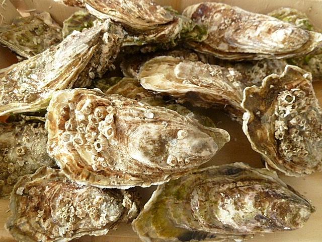 Einige Austern