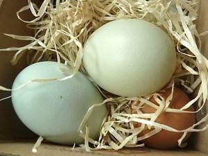 Hübsche, verschiedenfarbige Eier