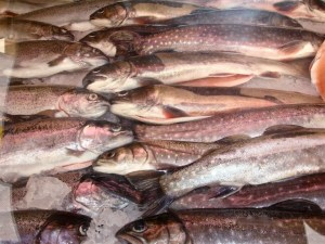 Fischtheke auf dem Bauernmarkt