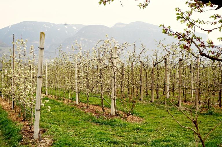 Äpfel und Birnen, frisch für den Hofladen und die verschiedenen Produkte