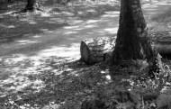 Woodland scene 1985 5