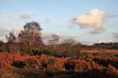 Landscape with bracken