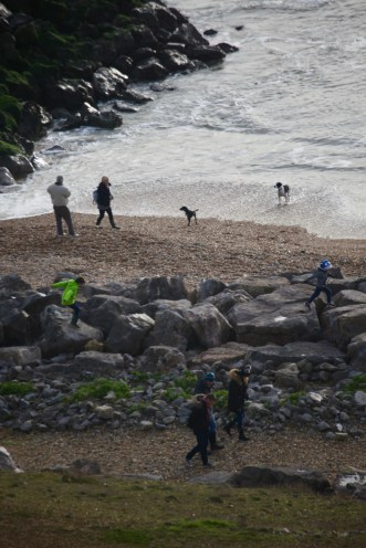 Groups and dogs on beach 2