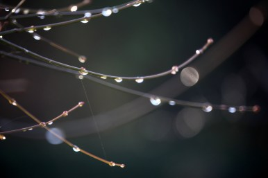 Raindrops on twigs 1