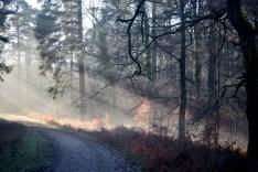 Forest sunlight shafts 1