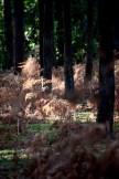 Honeylake Wood 6