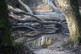 Fallen tree and reflections 1