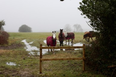 Horses in rugs 1