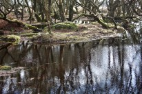 Trees reflected in pools 4