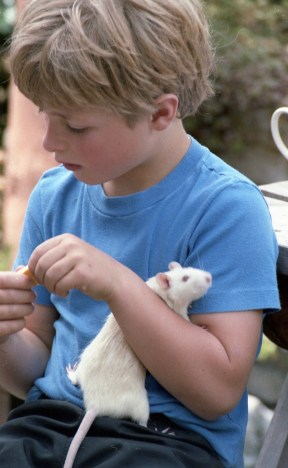 Sam and Ratty 2