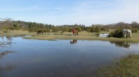 Ponies beside pool 1