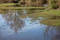 Flooded landscape 3