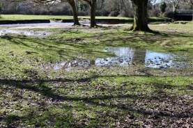 Pools, reflections, shadows 1