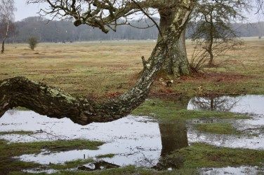 Waterlogged landscape with ponies