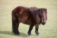 Pony 5
