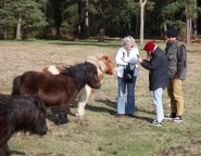 Group photographing ponies 2
