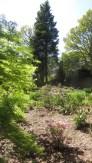 MacPenny's garden 2