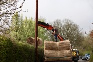 Thatching reeds unloading 4