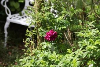 Roseriae de l'Hay 2