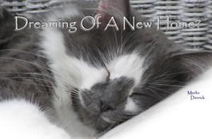 Dreaming of a New Home?