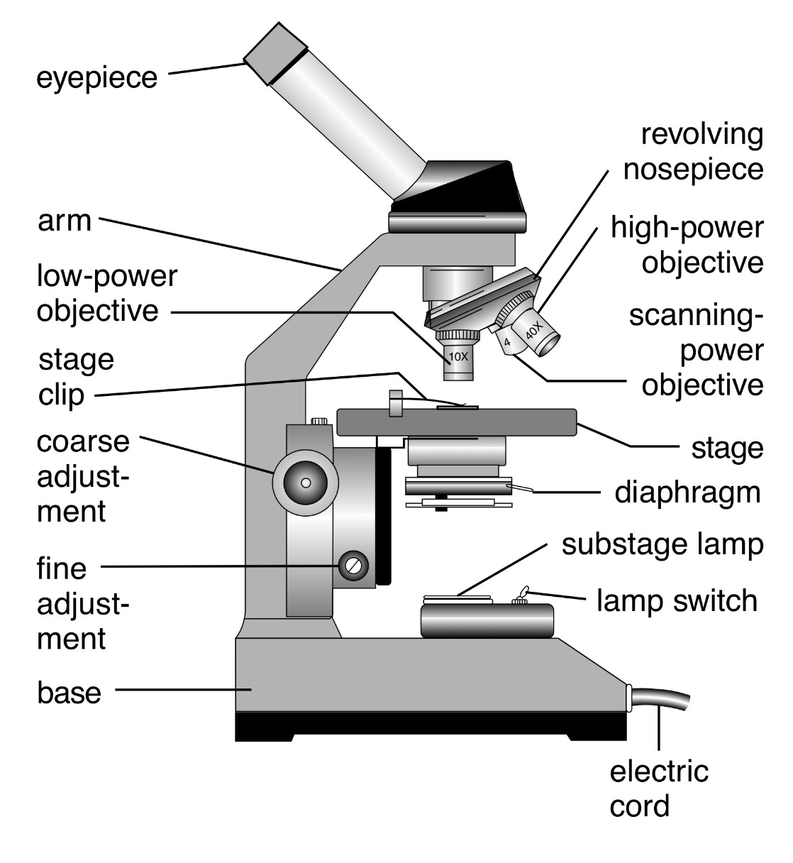 a diagram of microscope parts electricity board wiring 20 and function pictures ideas on compound light worksheet