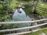 Tummelplatz für kleine Amphibien.