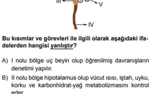 11 Sınıf Biyoloji Test 9 Sinir Sistemi 2 Test çöz