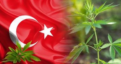 40-cannabis-in-turkey_4k-4