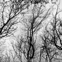 Branching outwards