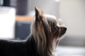 Hunde hören im Ultraschallbereich