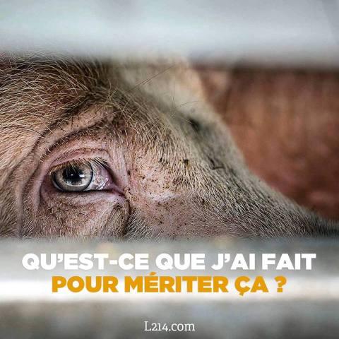 élevages abattoirs