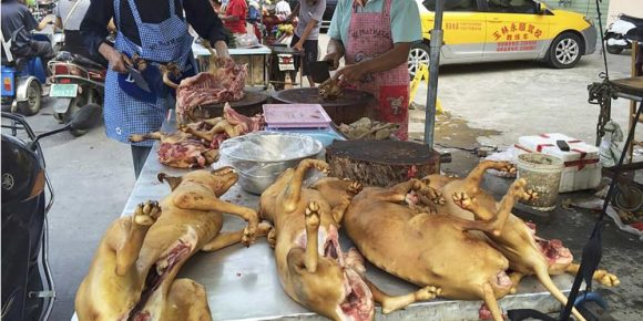 souffrance animale Yulin