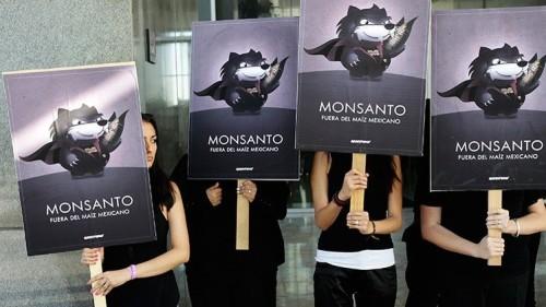 """A nova """"lei Monsanto"""" para a África obrigaria a usar sementes modificadas"""