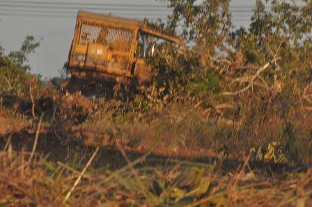 Desmatamento na Gleba Taua