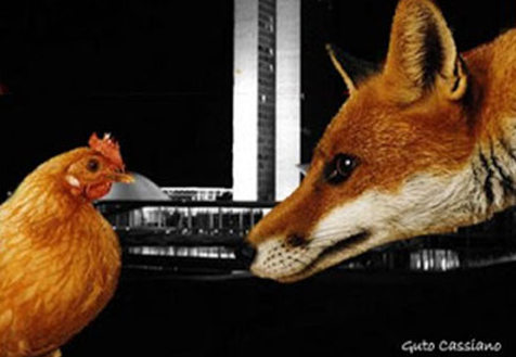 Raposa no galinheiro