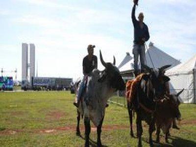 Manifestantes protestam contra decisão do Supremo Tribunal Federal de proibir a vaquejada no país José Cruz/Agência Brasil