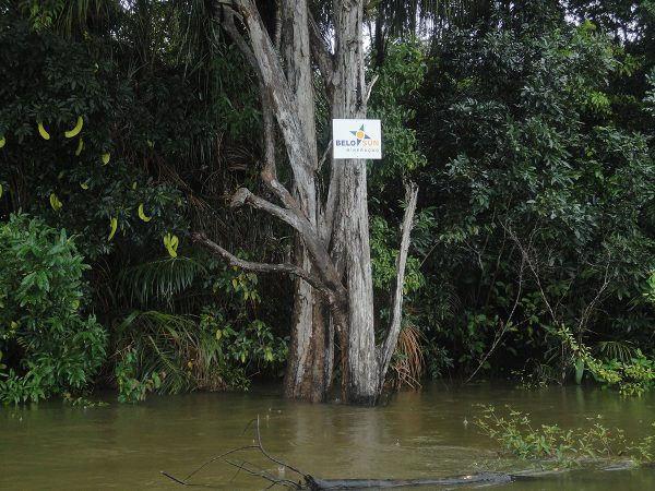 Em trecho do rio Xingu, placas demarcam área da Belo Sun em troncos de árvores / Francisco Vorcaro/ Agência Pública