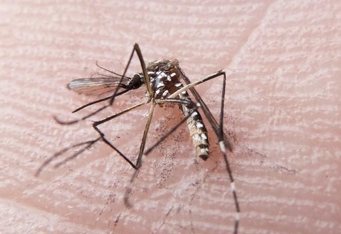 Mutação genética tornou vírus zika capaz de causar microcefalia em fetos, diz estudo