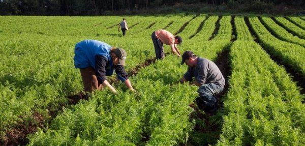Senado aprova projeto que alivia dívidas de produtores rurais, texto vai à sanção
