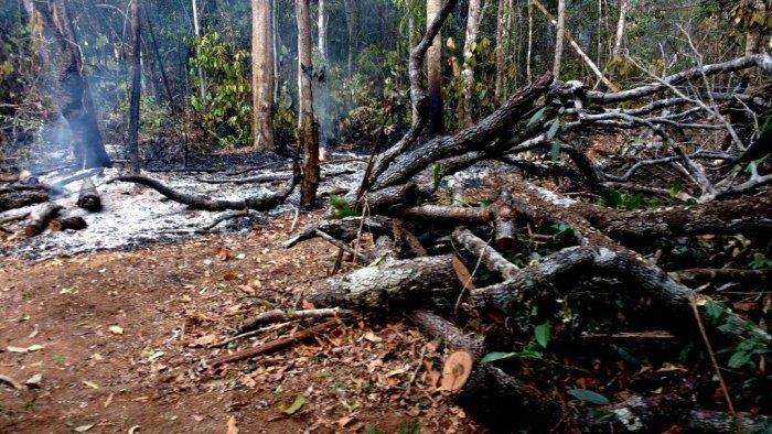 América do Sul perdeu 30% de suas áreas selvagens desde 1990