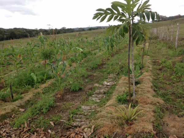 Oficina de horta agroflorestal ensina a produzir alimentos sem agrotóxicos
