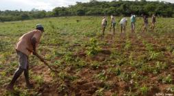 2017 foi um cenário desastroso para Agricultura Familiar com o Governo de Temer